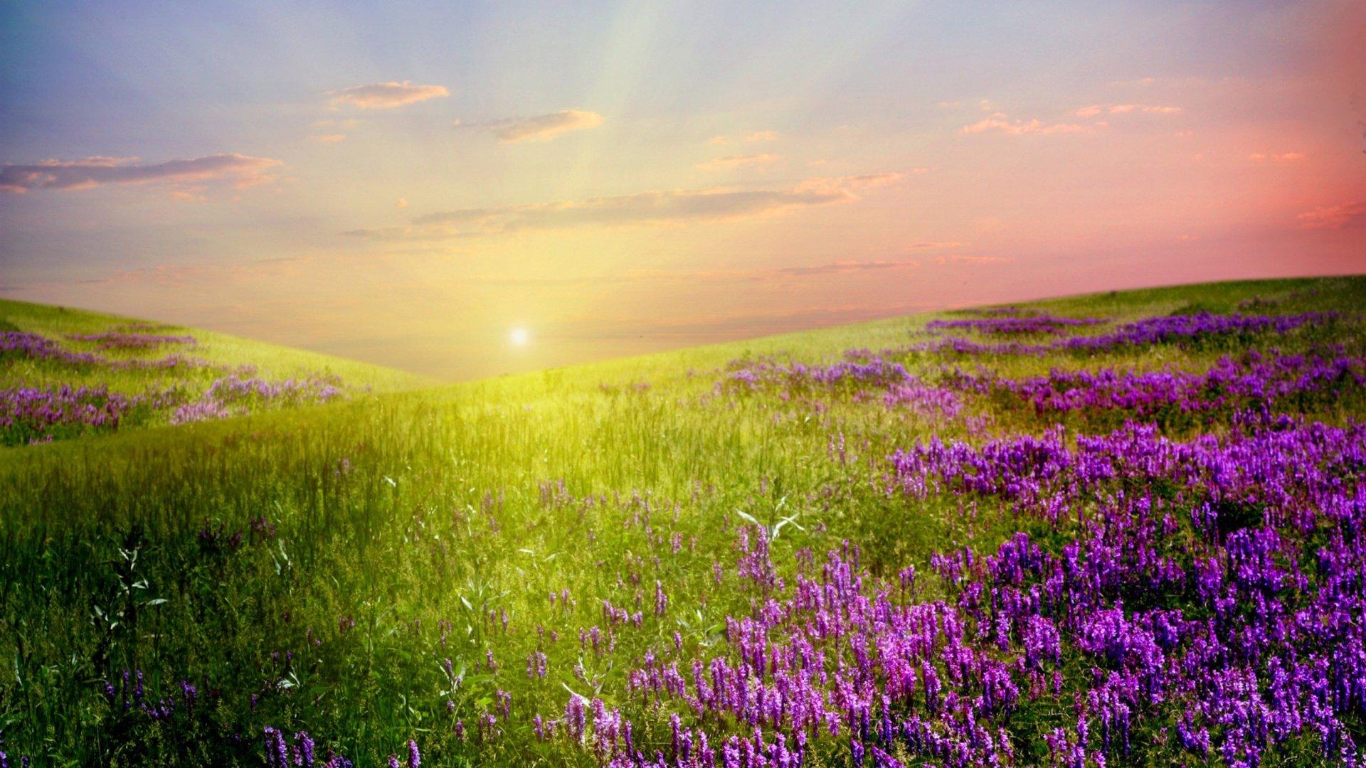 Фото цветы полей
