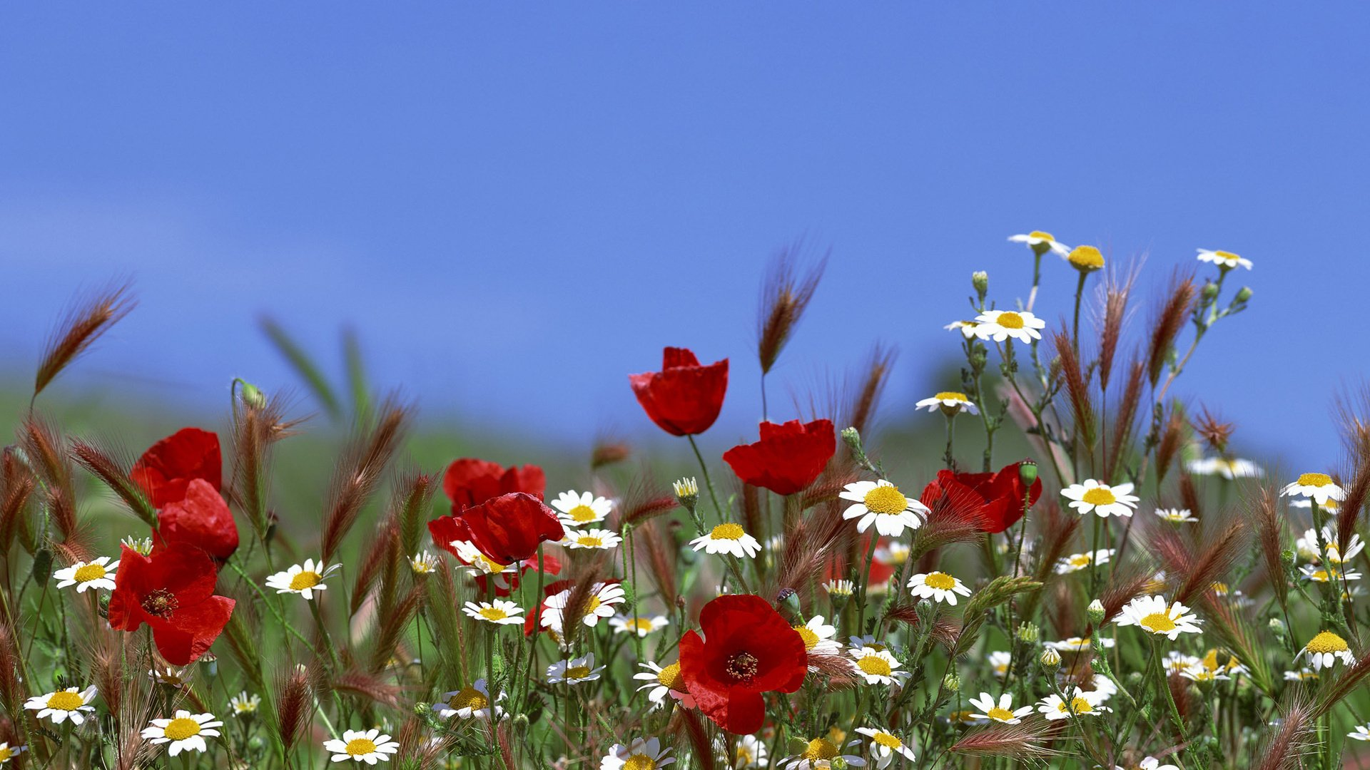 Цветы огненные картинки 5