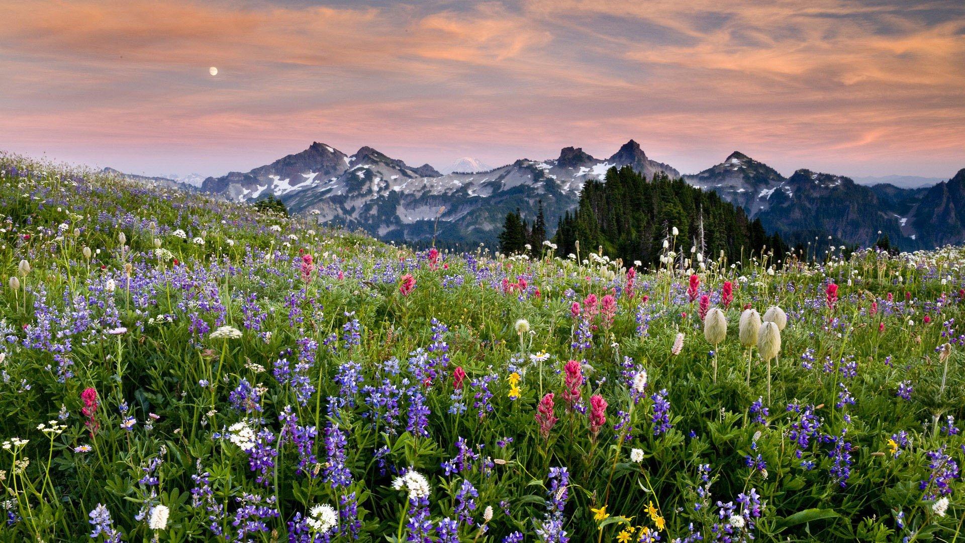Красивые закаты 33 фото  Триникси