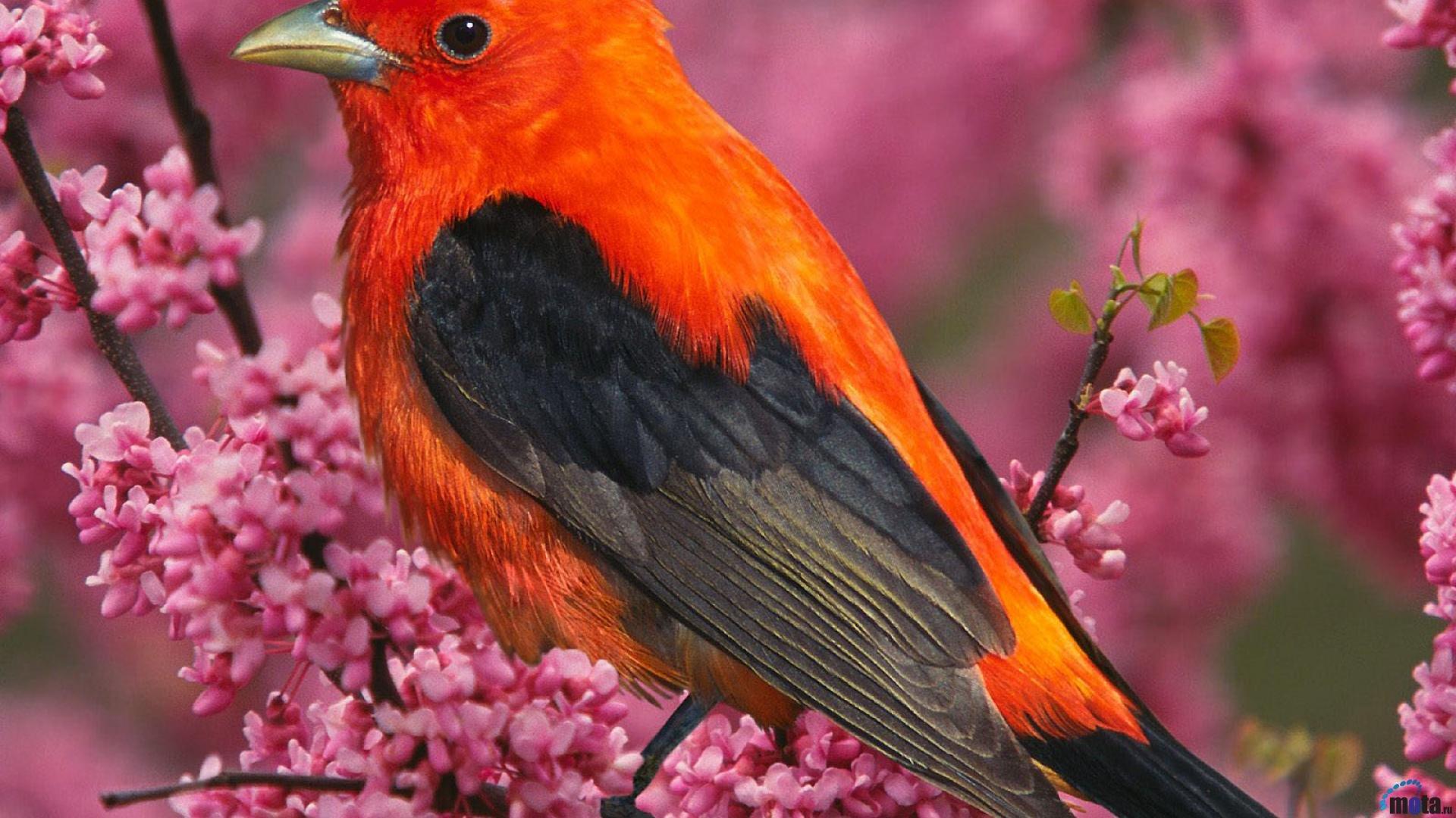 Сайт птицы с фото