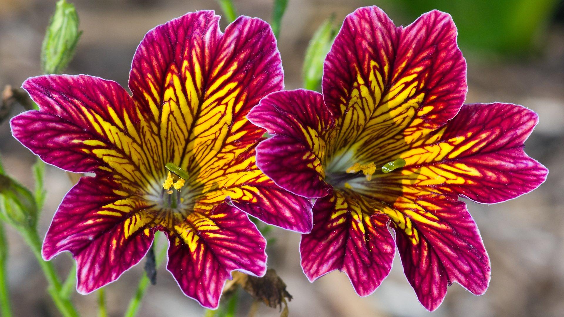 Самые экзотические цветы мира