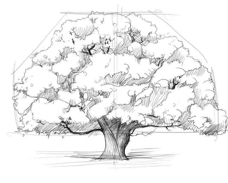 Как нарисовать дерево карандашом