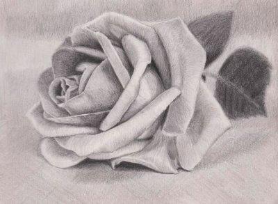 Как рисовать карандашом для начинающих поэтапно легкие картинки