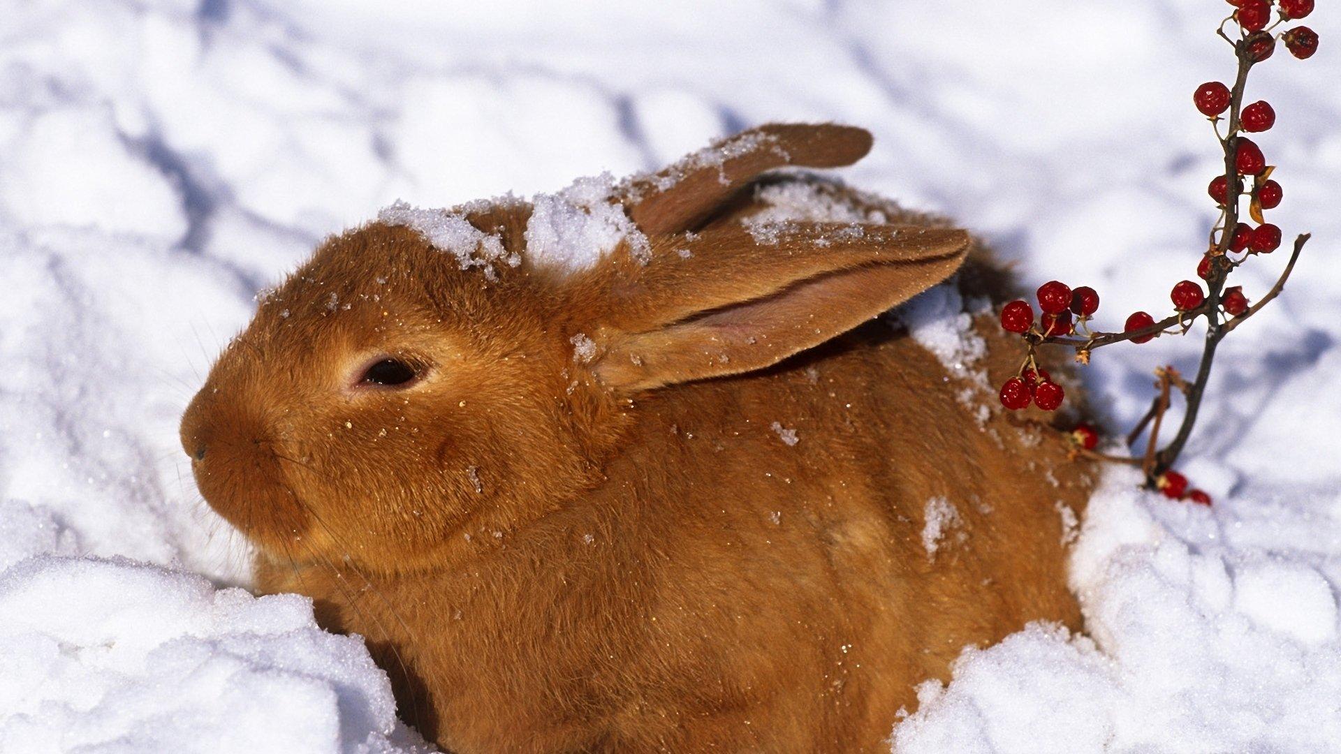 картинки на рабочий стол животные зима