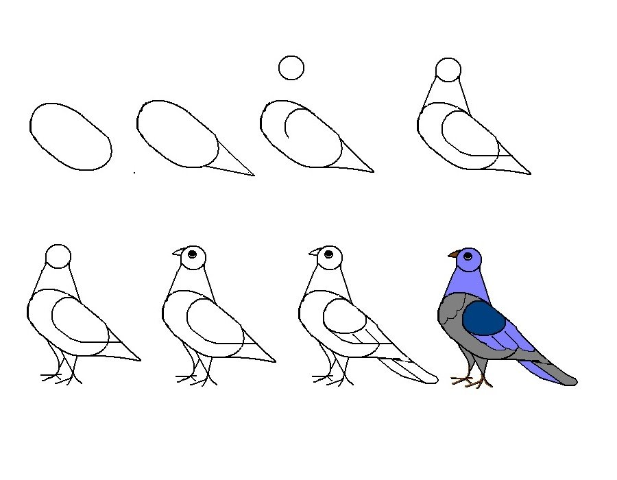 Птицы поэтапно карандашом для