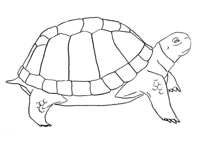 Легкие рисунки черепаха