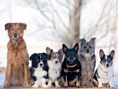 Как нарисовать разные породы собак поэтапно