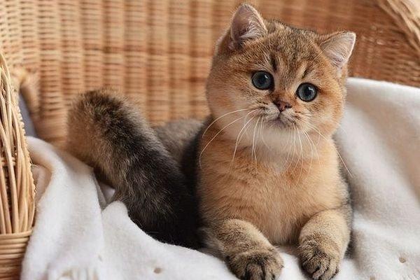 Рисунки фото кошек