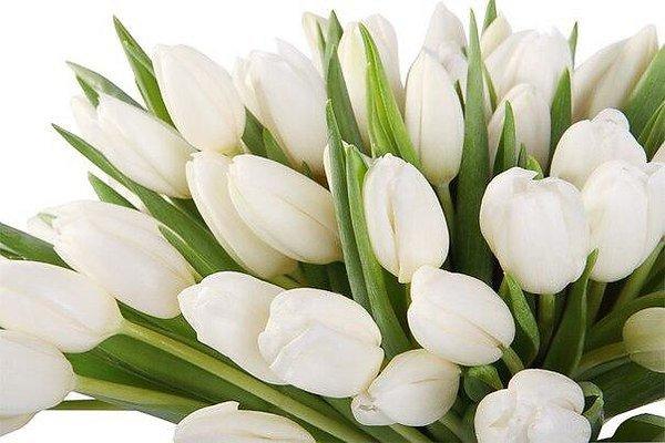Белые тюльпаны » DreemPics.com - картинки и рисунки на ...