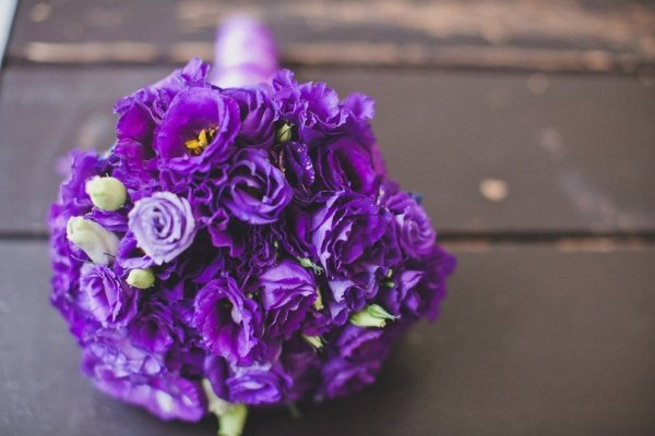 Цветок эустома фиолетовая - картинки, фото