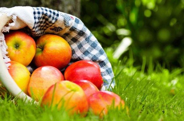 Яблоки стеклянные на рабочий стол